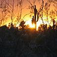 Blazing_sunset