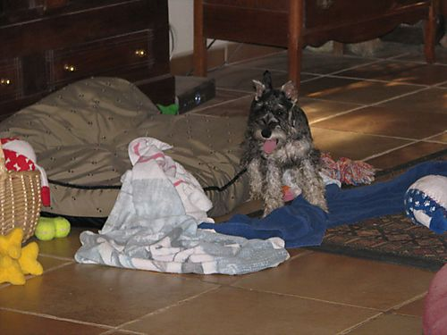 Tbone and the towels