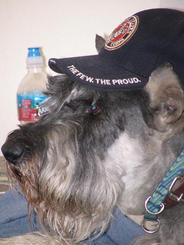 Roger USMC cap