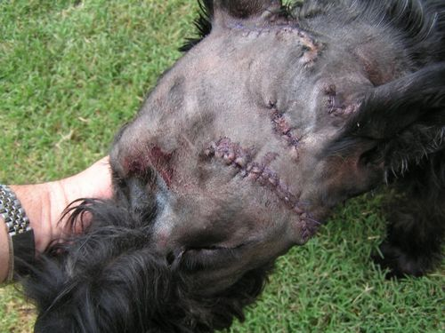 Roscoe top of head sutures
